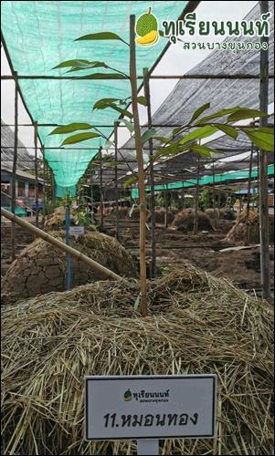 11 Monthong Durian