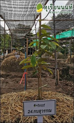 kob su wan Duriannont-24