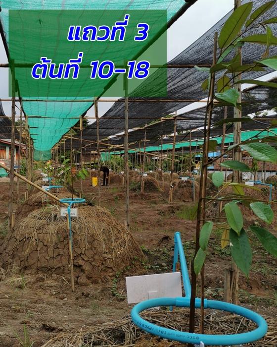 Durian 3rd row