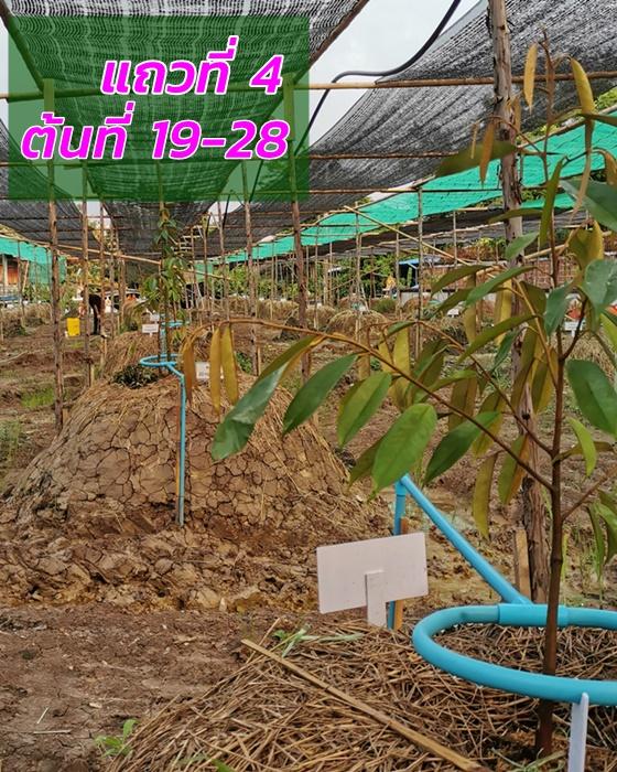 Durian, row 4
